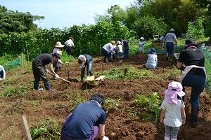 ほりもと農園2016_収穫風景