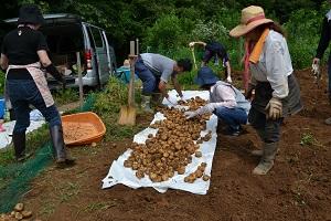 ほりもと農園2016_収穫1
