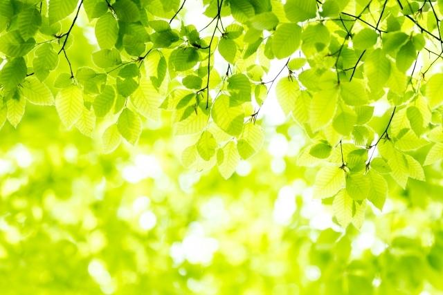 new-green.jpg