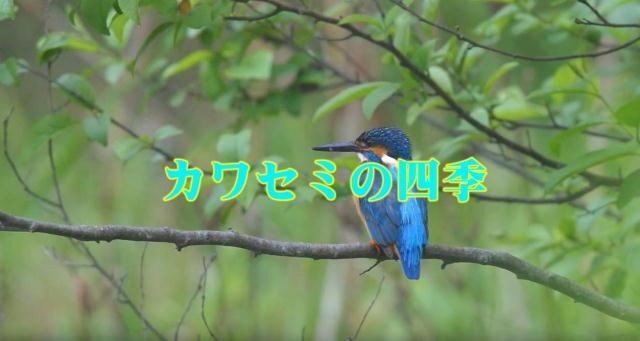 20160721-b.jpg