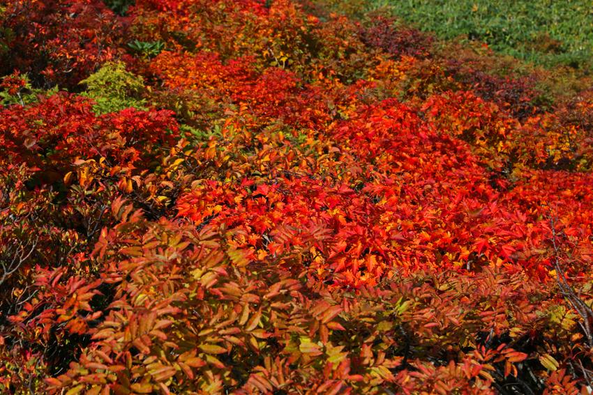 20160924栗駒山山頂の紅葉