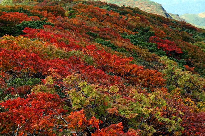 20160924栗駒山山頂の紅葉2