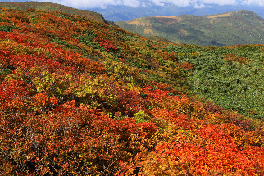 20160924栗駒山山頂の紅葉3