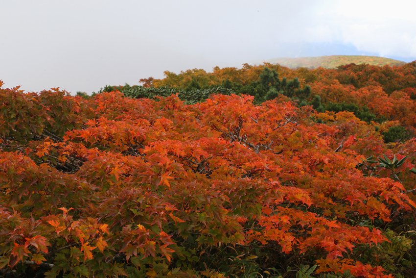 20160924栗駒山山頂の紅葉5