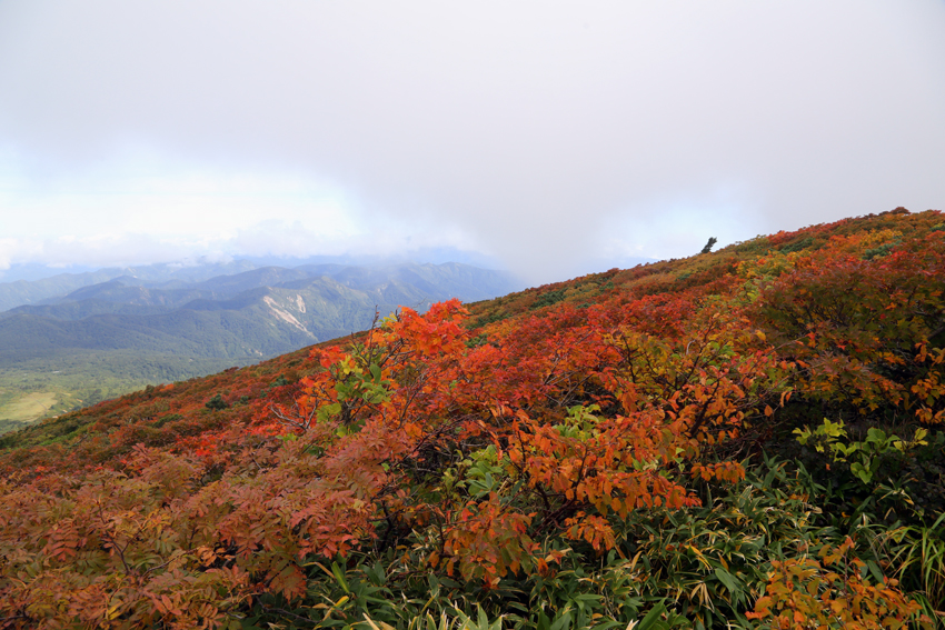20160924栗駒山山頂の紅葉6