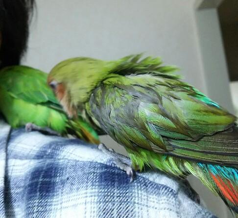 水浴び後2