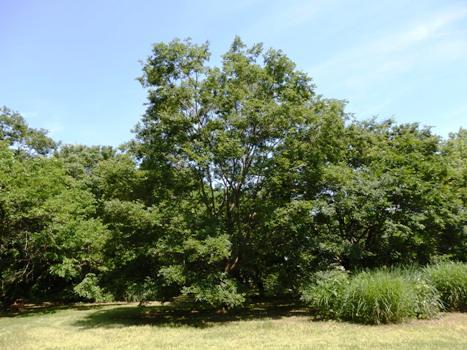 きれぎれの風彩 6月の北本自然観察公園160704-11