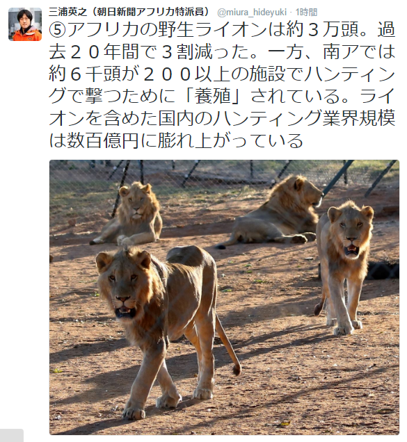 ライオン②