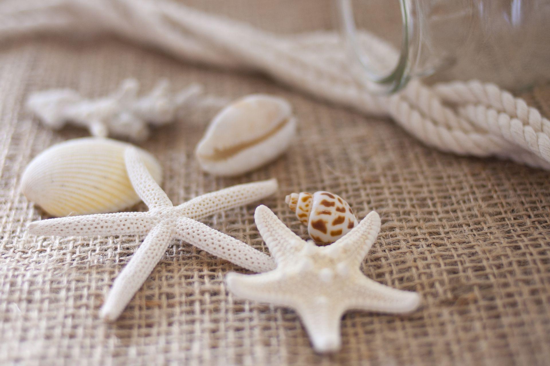 貝殻アイテム開運pc壁紙 美空間社長blog 暮らしを楽しむ