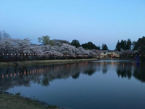 桜(馬見塚)