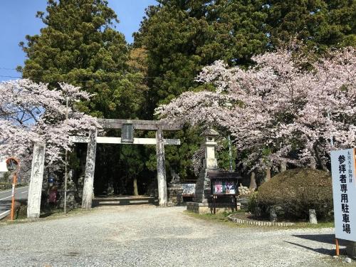 桜(五十鈴)