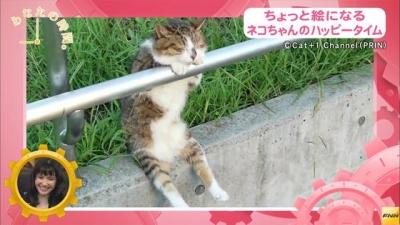 ちょっと絵になる猫ちゃんのハッピータイム