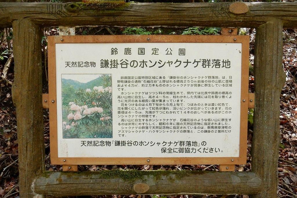 日野シャクナゲ 020