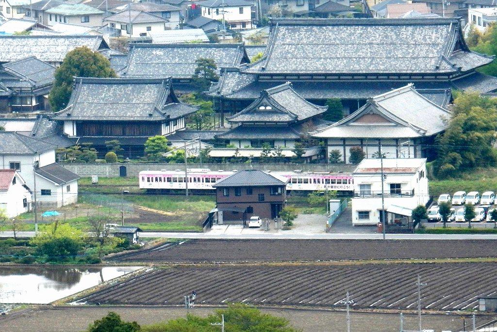 日野シャクナゲ 181