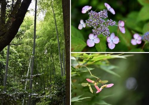 ⑨竹林と紫陽花