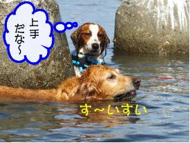 0816dan-nobi01.jpg