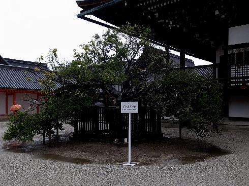 430-04.jpg