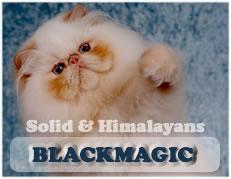 blackmagicbanner.jpg