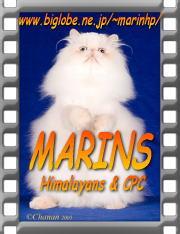 marins1_banner.jpg