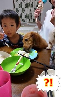 ケーキ大好き犬太郎