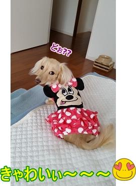 きゃわいぃ~~~
