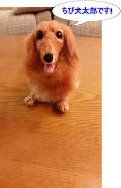 ちび犬太郎です