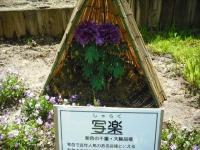 牡丹祭り2016-05-14-005
