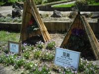 牡丹祭り2016-05-14-004