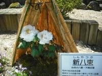 牡丹祭り2016-05-14-010