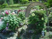 牡丹祭り2016-05-14-097