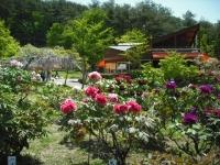 牡丹祭り2016-05-14-214