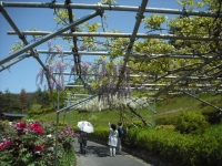 牡丹祭り2016-05-14-220