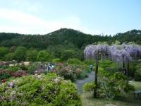 牡丹祭り2016-05-14-270