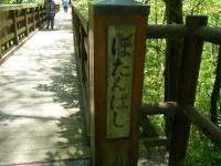 牡丹祭り2016-05-14-268