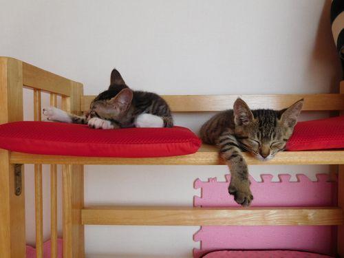 まほらねこ 木製ベッド