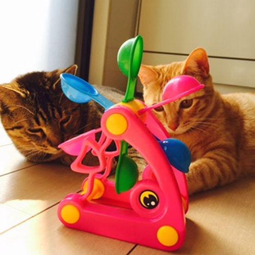 にっぱち象おもちゃ