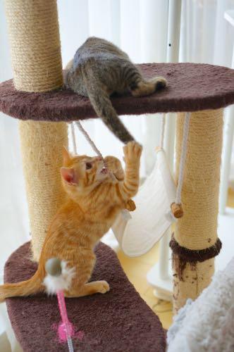 兄弟 タワー遊ぶ