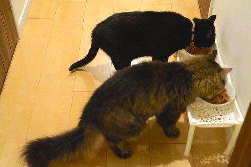 記念日お食事2