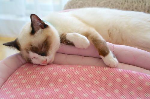 ジンお昼寝