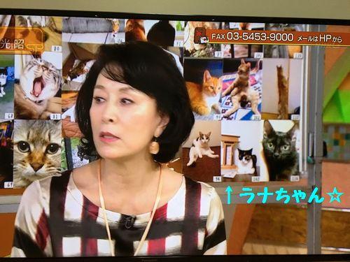 ラナちゃんテレビ1