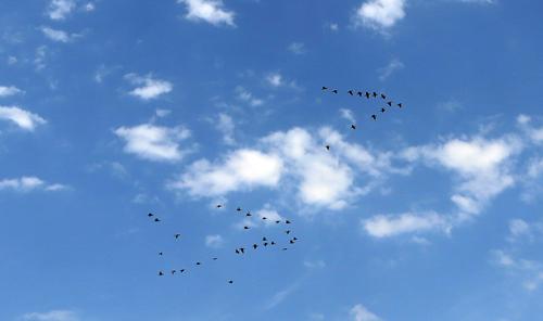 160902鳥