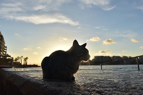 CATS D4S_3084