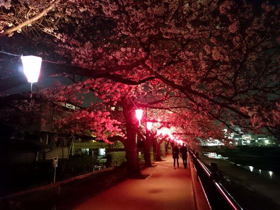 2016yozakuraDSC_1199.jpg