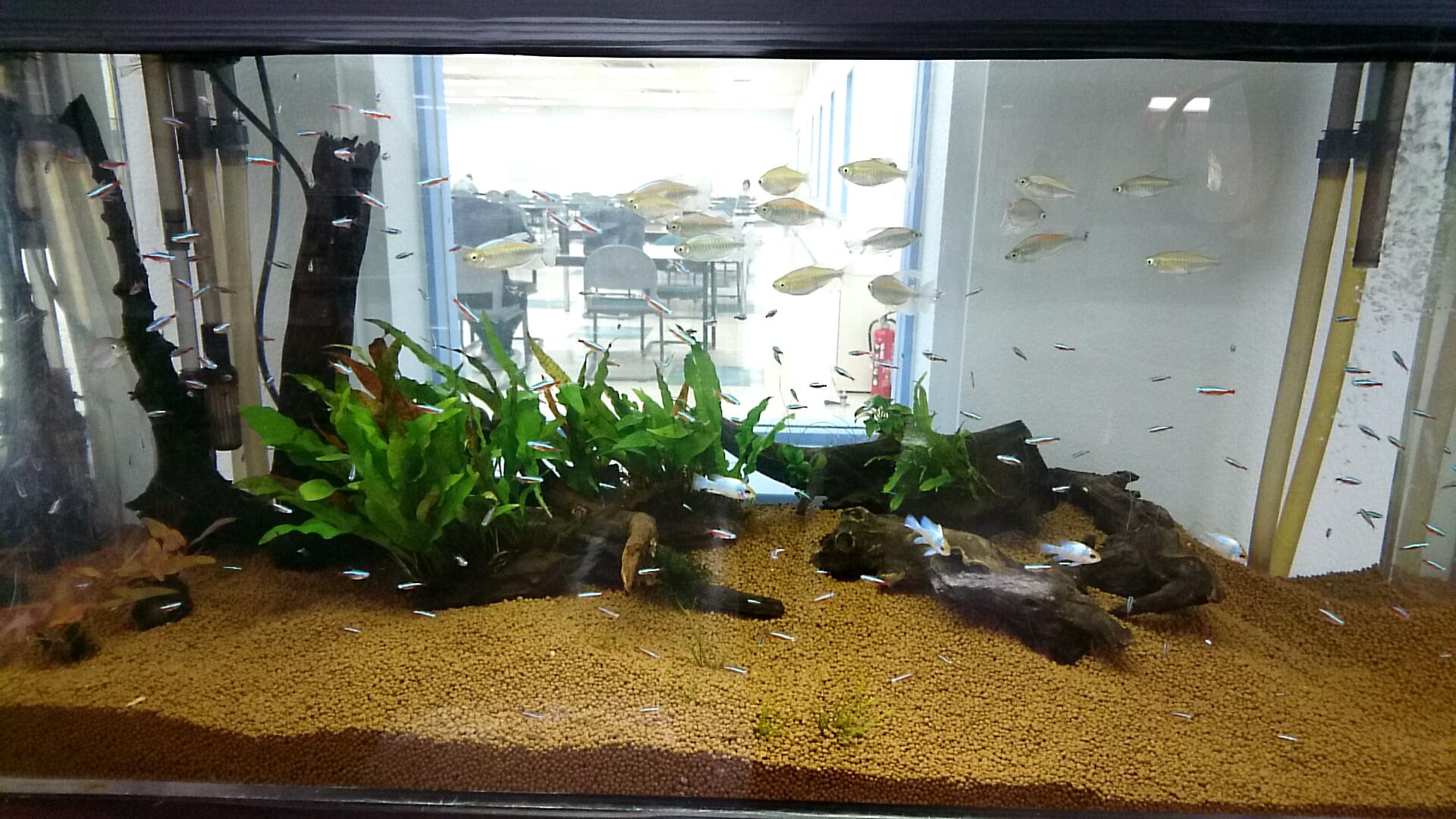 L2熱帯魚1