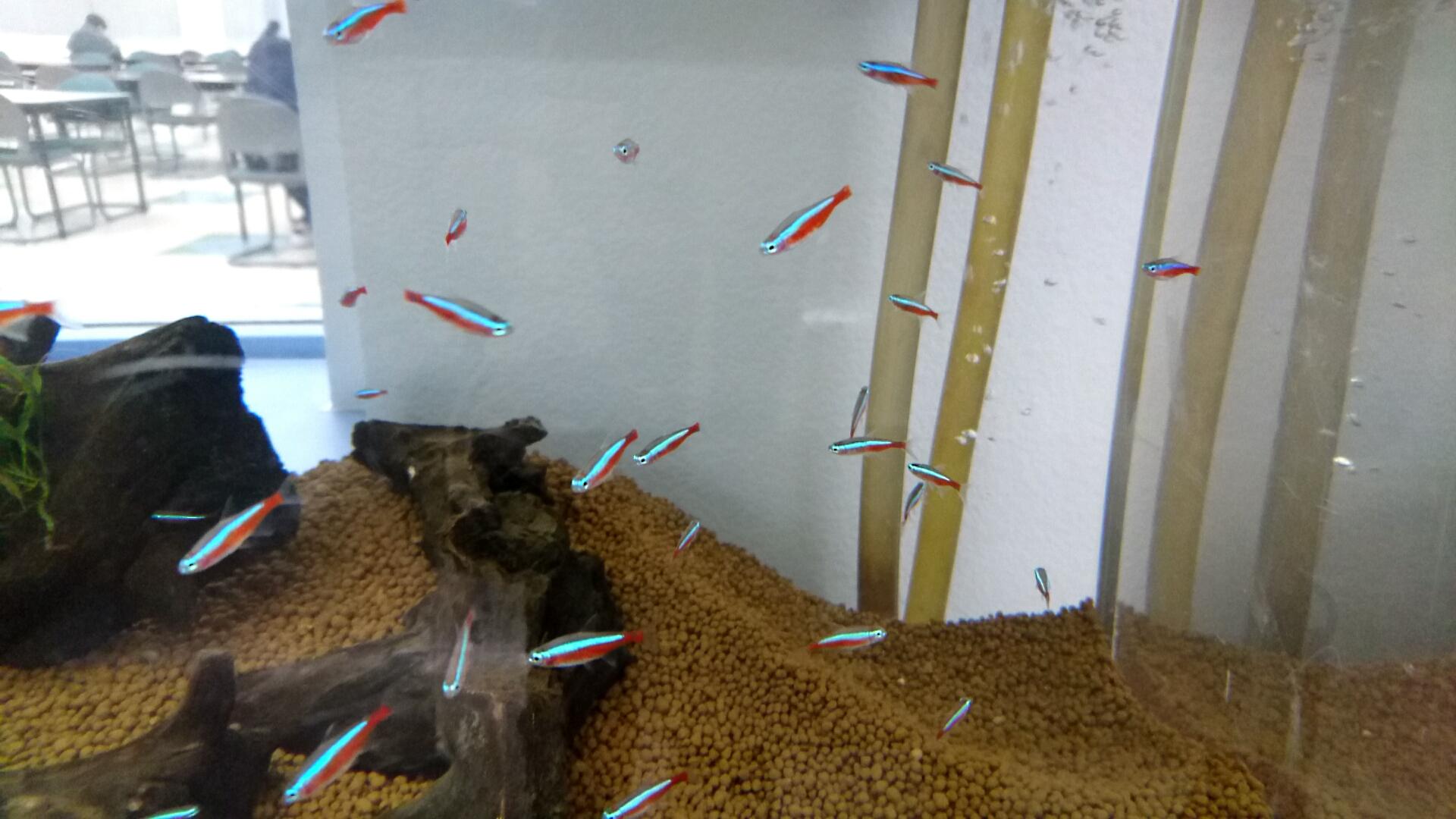L2熱帯魚3