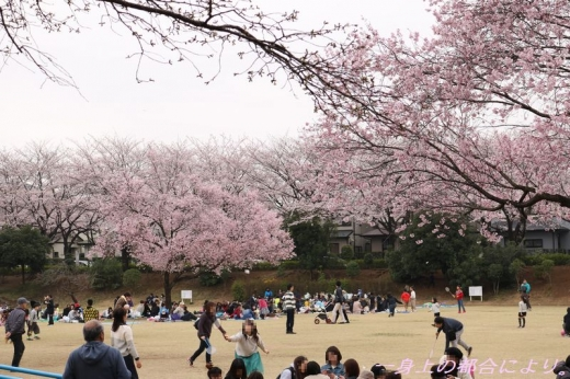 IMG_1206御伊勢塚公園・春1