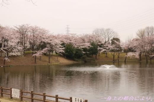 IMG_1210御伊勢塚公園・春2