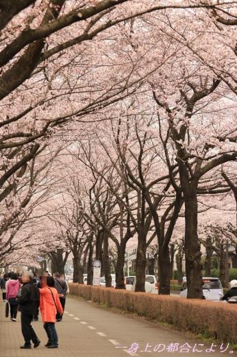 IMG_1265御伊勢塚公園・春3