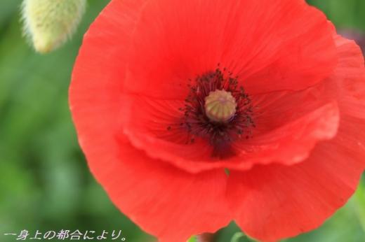 IMG_1454東松山農林公園3