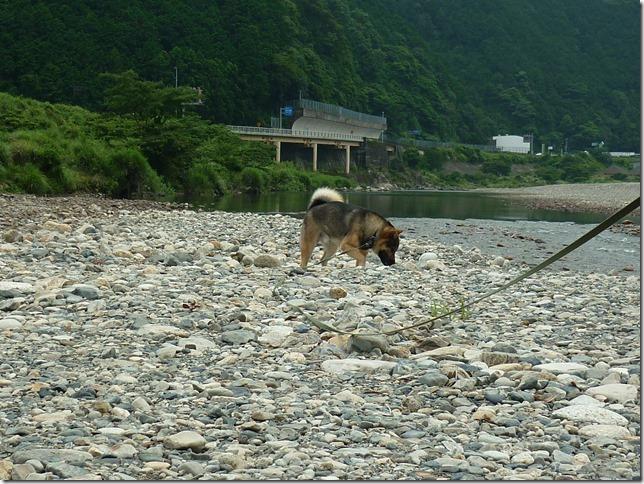 201607川遊び03-06